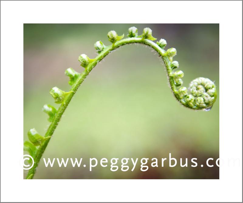 Peggy garbus garden 4