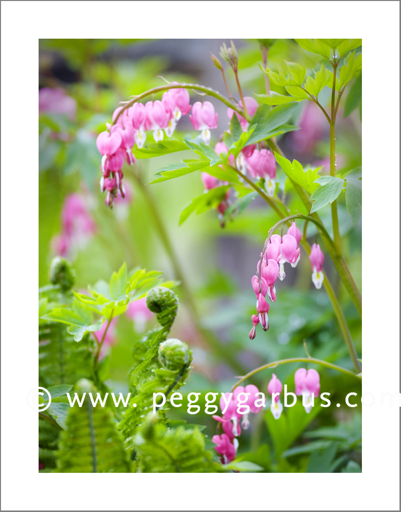 Peggy garbus garden blog 2