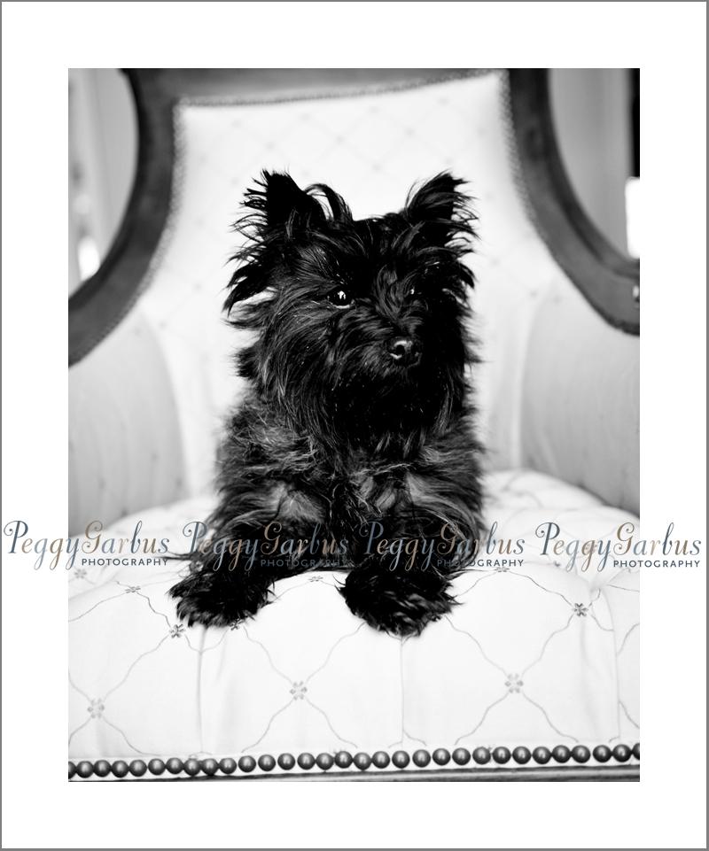 DogPhotographyPeggyGarbusTiki2